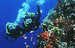 Strait of Tiran Coral Reefs in Sharm el Sheikh Egypt